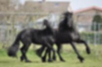 equinemotion gezond paard