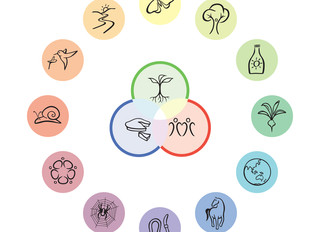 Permakultur - von der Idee des Gartens bis zur Umsetzung in der Gemeinschaft
