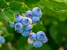 berries-3548239__340.webp