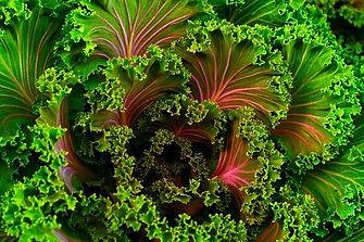 plant-690051__340.jpg