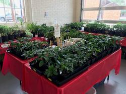 Plant Sale.2