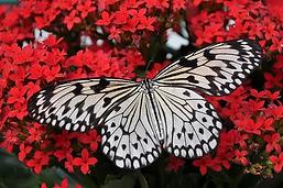 butterfly-1218884__340.webp