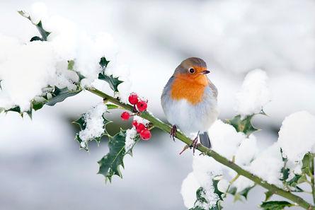 Birds and holly.jpg