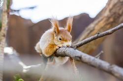 the-squirrel-4142446__340