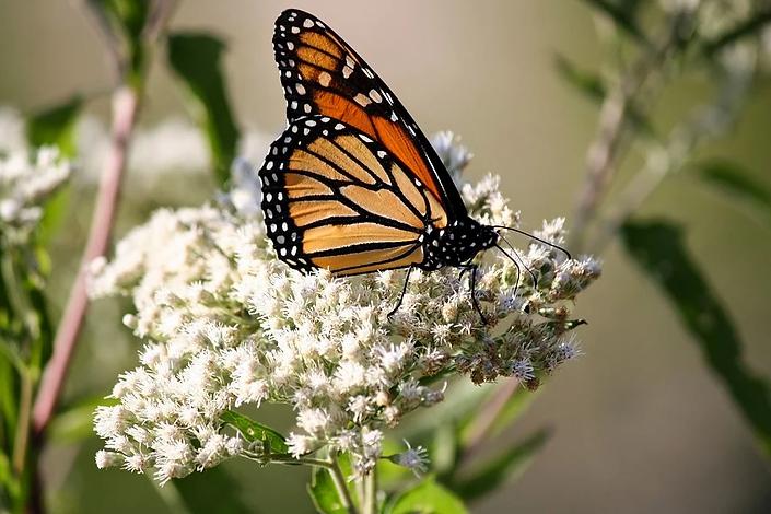butterfly-3028166_960_720.webp