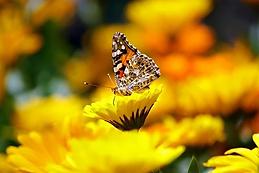 butterfly-169924__340.webp