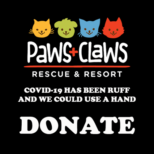 Donate to Paws+Claws