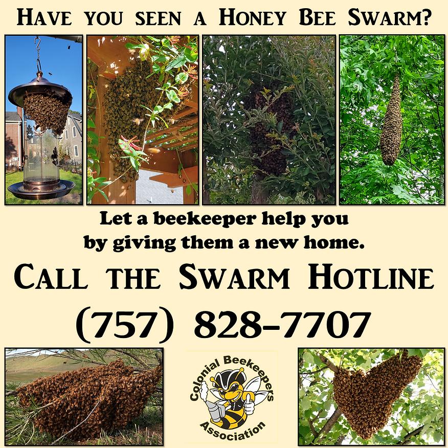 Swarm Advertisement 2.png