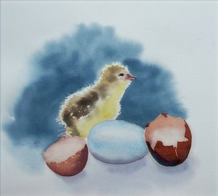 Chick & eggs