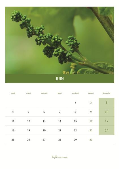 calendrier_VIN7.jpg