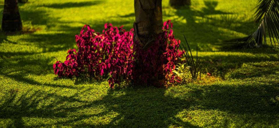 Garden_Hamsa Villas_Goa.jpeg