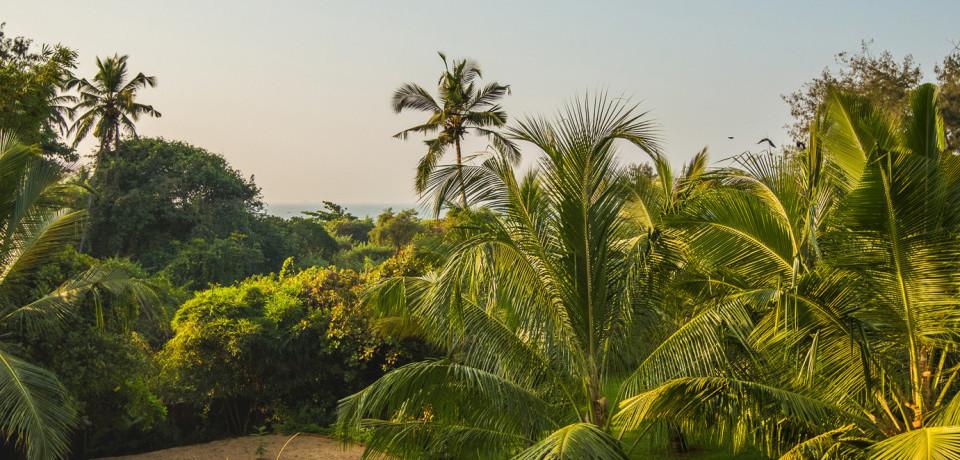 Garden View_Hamsa Villas_Goa.jpeg