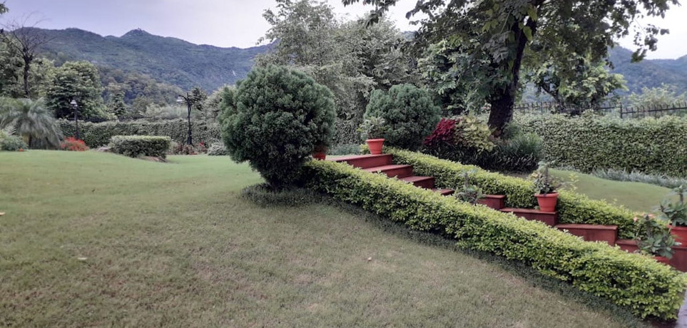 Lush Green Lawn 1.jpeg