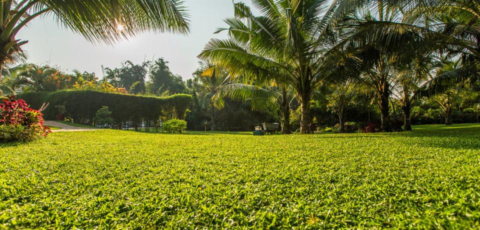 Lawn View_Hamsa Villas_Goa.jpeg