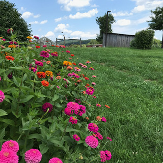 Farm beauty