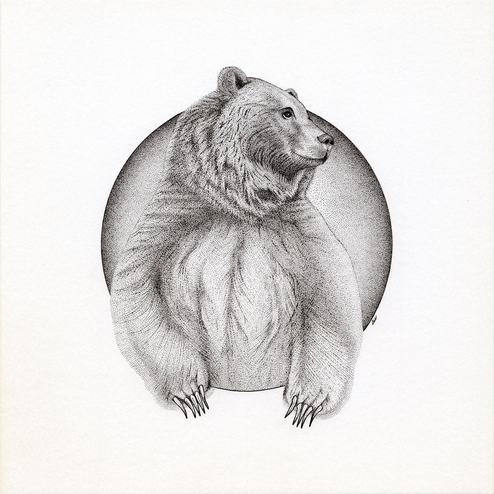 Grizzly Bear 600 DPi Hi Res.jpg