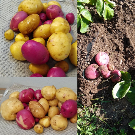 Potatoes are almost ready.