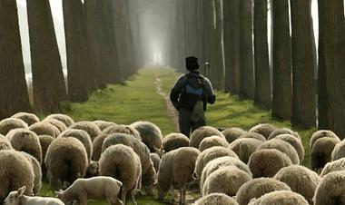 shepherd-and-sheep-2.png