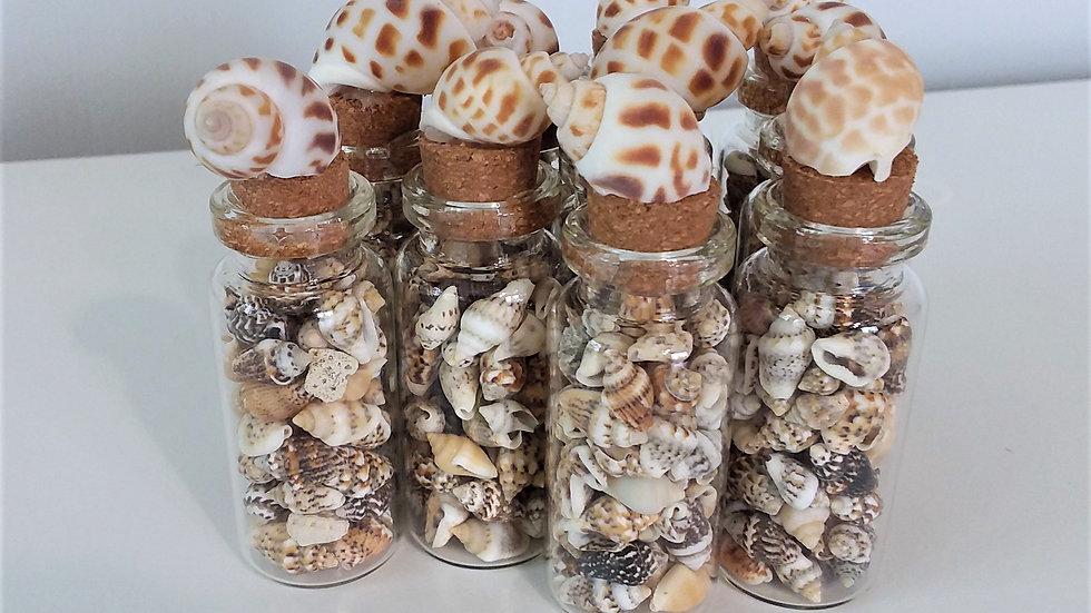 Tiny Seashells in a Jar, Party Favors