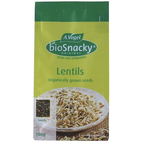 Organic Lentil Seeds