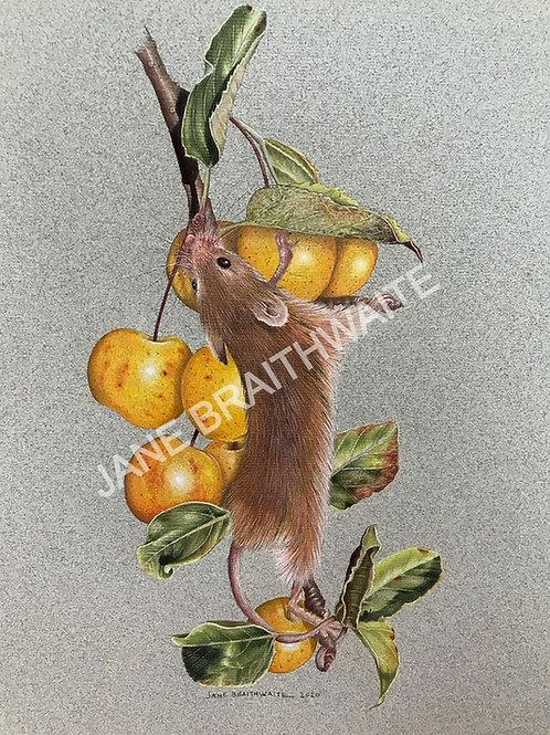 Crabapple Harvest
