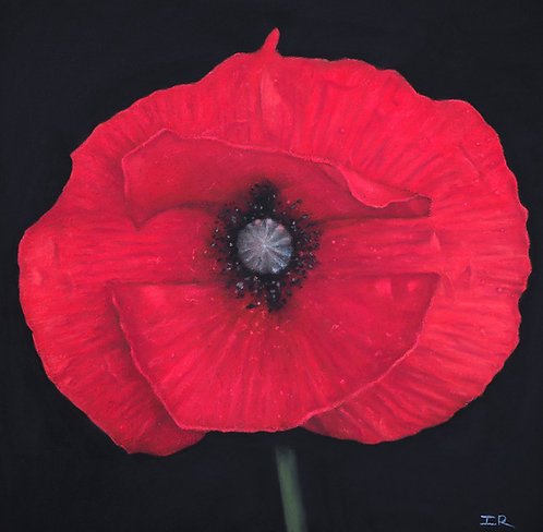 RED POPPY        not for sale
