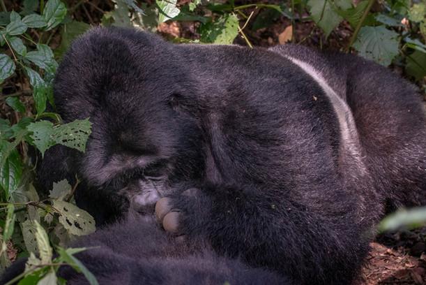 The Primates of Uganda