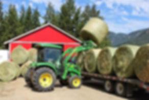 Loading Hay[1].jpg