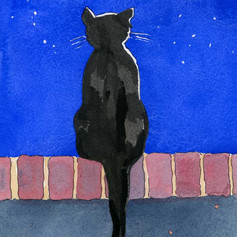 Mooncat sat on a wall under the stars