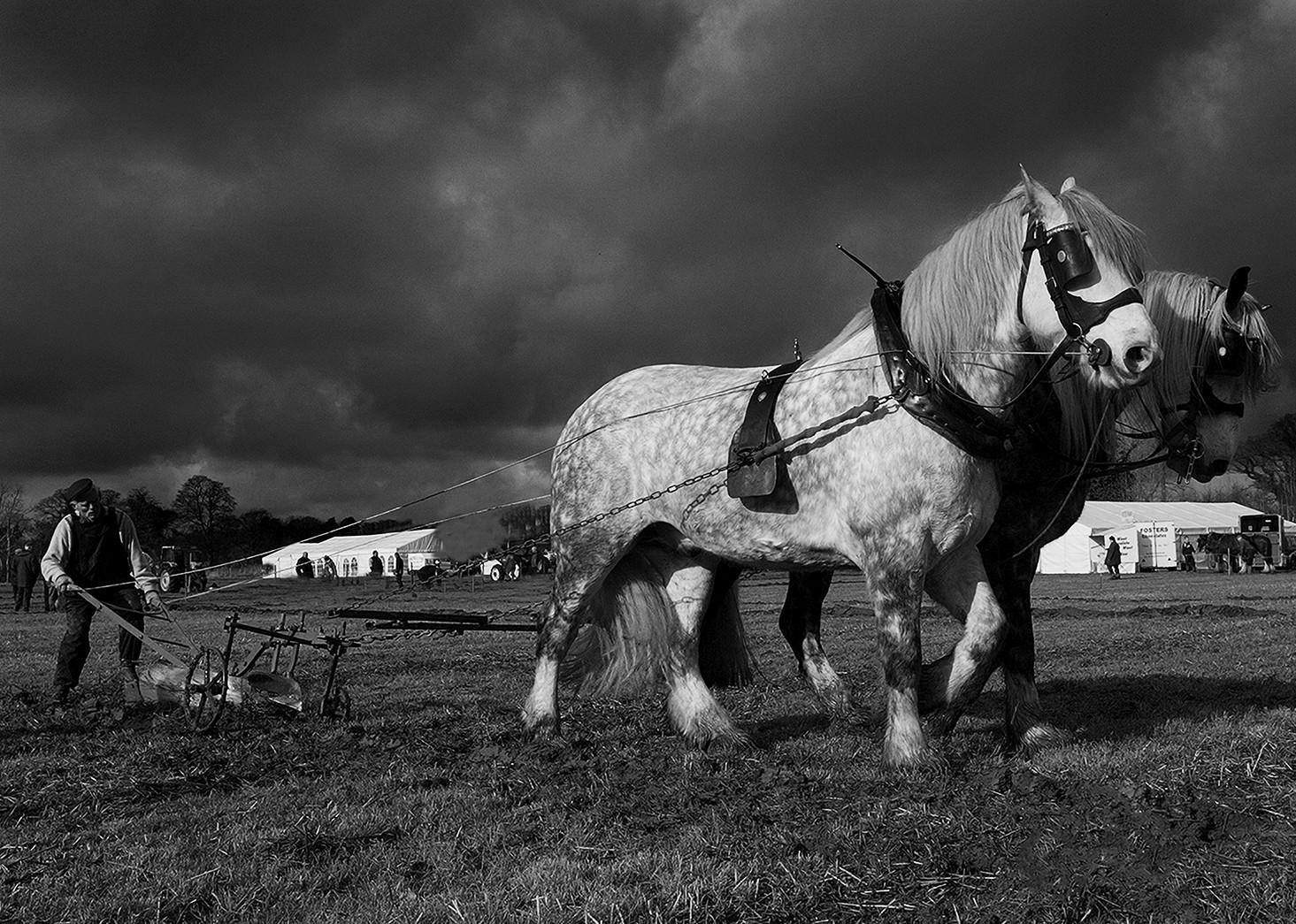 PDI - Heavy Horses by Paul Irwin (10 marks)