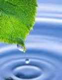 water and leaf.jpg