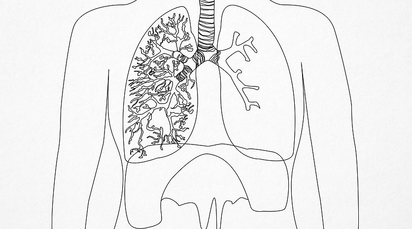Breathing Revolution_Lungs diagram_line.