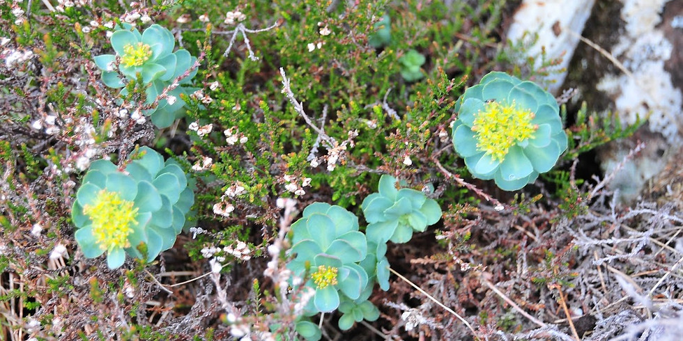 Introduction to Mountain Flora, Part 1