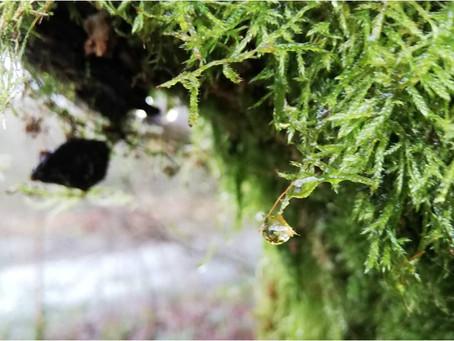 Awake to the English rain forest