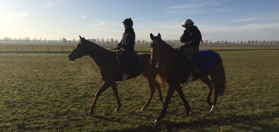 Some of the horses on the way back from exercise