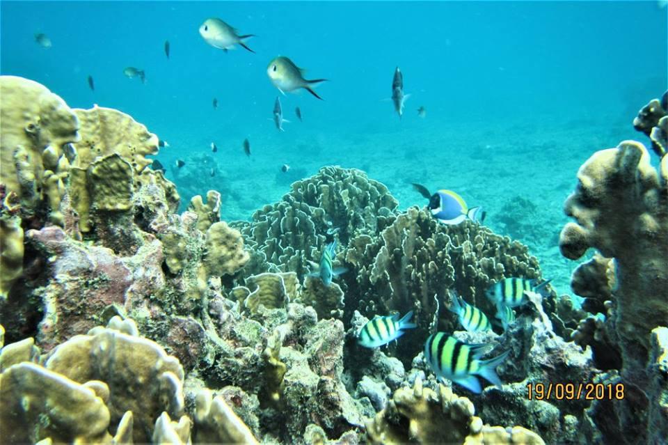 reef 19.09.17 5.jpg