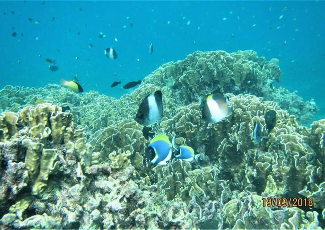 reef 19.09.17 3.jpg