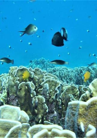 reef 19.09.17 6.jpg
