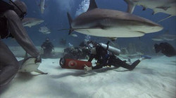 Johanna and the Whale Trailer Pic 1.jpg