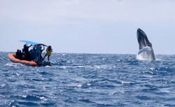 Johanna and the Whale Trailer Pic.jpg