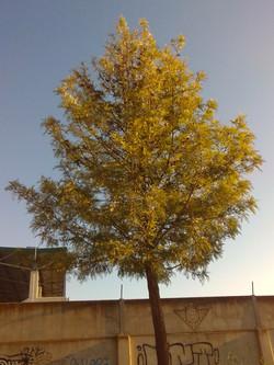 Taller_fotografia_Carola (2)