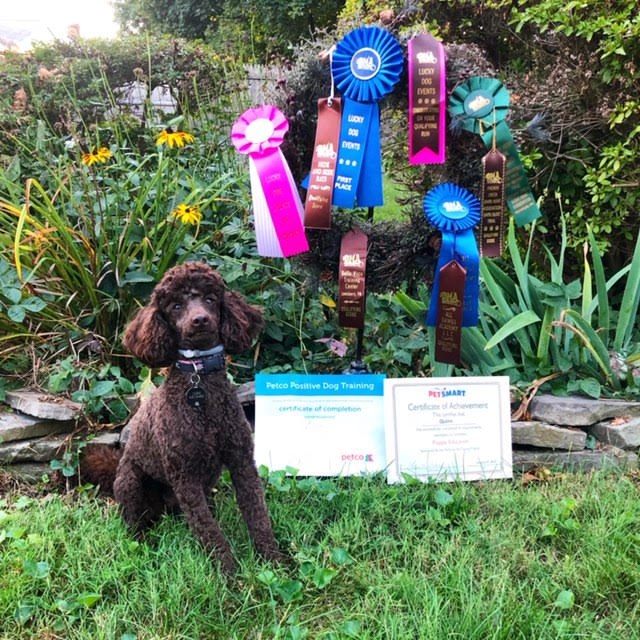 Quinn Ribbons 1 year