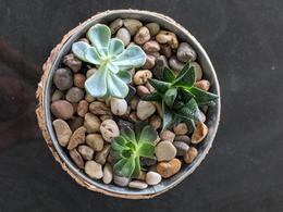3 Succulent Bowl