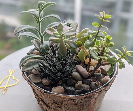 5 succulent pot.jpg
