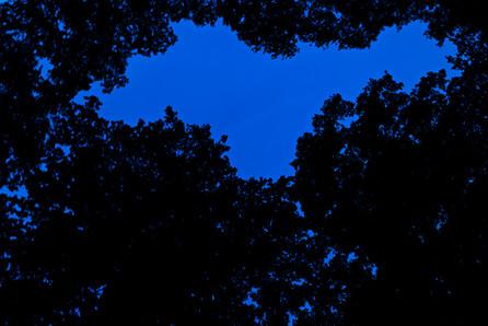 Blue dream 10