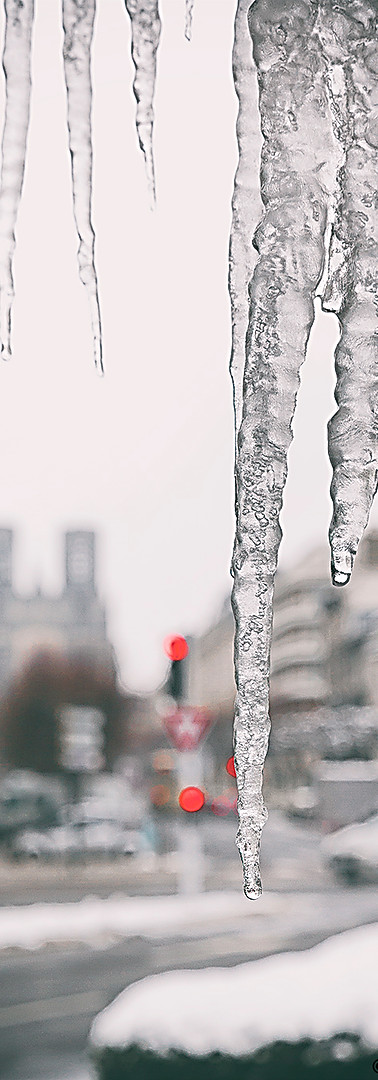 glace 2018.jpg