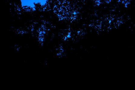 Blue dream 8