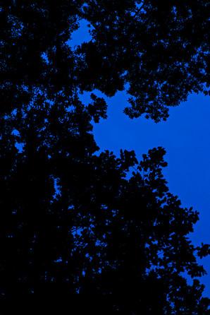 Blue dream 11