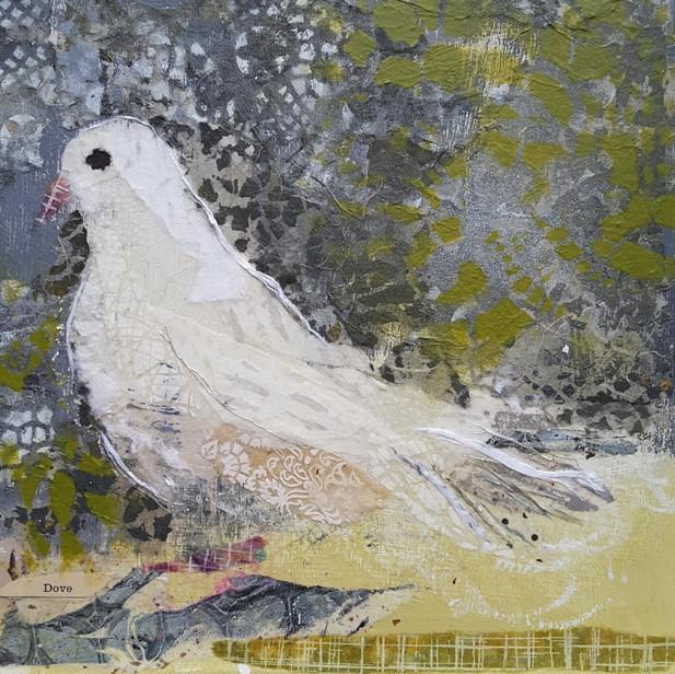 Pretty White Dove