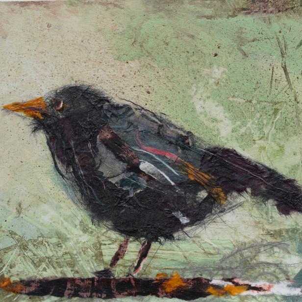 Big Blackbird